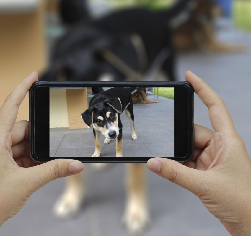 Clicking photo of dog from camera